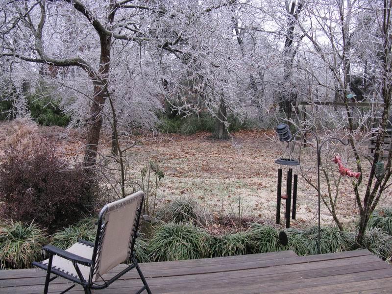 Ice coats my backyard.